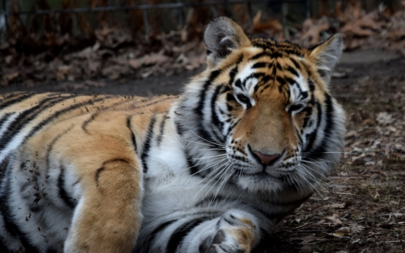 Cohanzick Zoo Activities in Southern Jersey