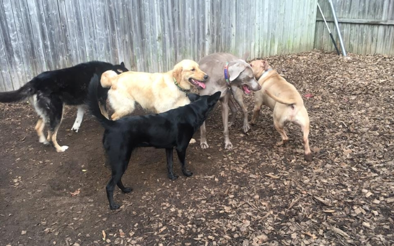 Country Haven Kennels Dog Park Mt Holly NJ