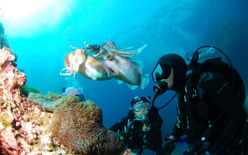 Divers Two Scuba Diving Charter Trips in Monmouth County NJ