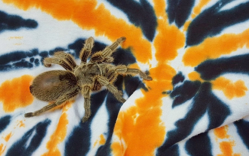 Fall Events at Insectropolis Halloween Events NJ