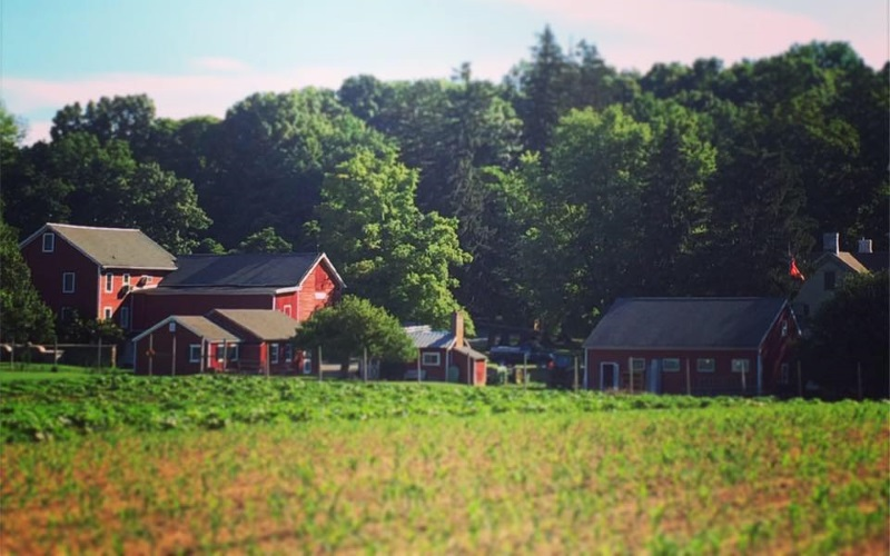 Image of a farm with multiple red buildings and a pumpkin field under a blue sky with trees in the back