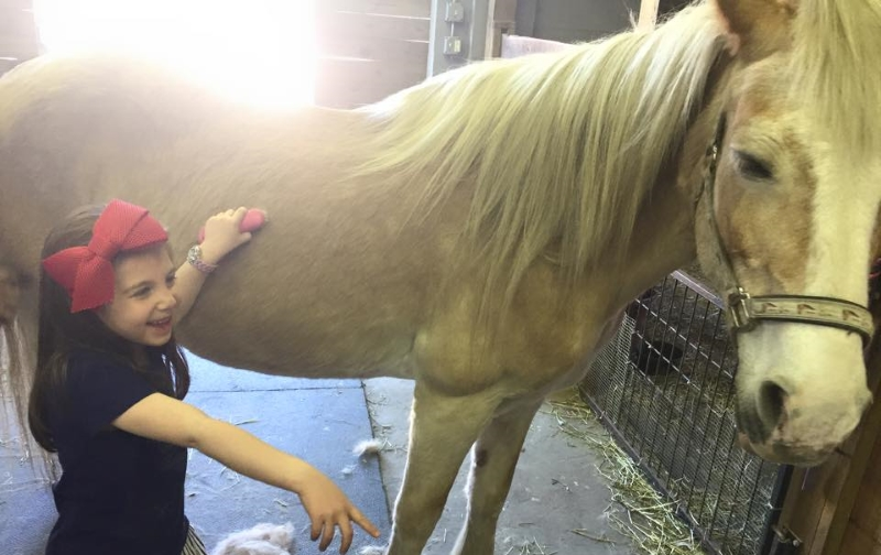 HorseSense Theraupedic Riding Center Animal Assisted Therapy in NJ