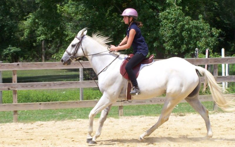 Hunter Brook Horse Farm horseback riding lessons in Central New Jersey