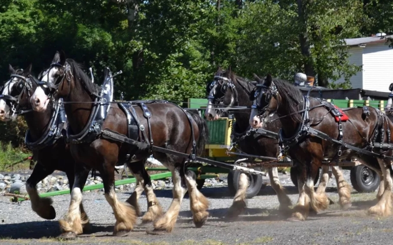 Kafka Farms Horse and Carriage Service Watchung NJ