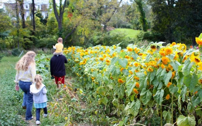 Longmeadow Farm Fun for Kids Northern Jersey