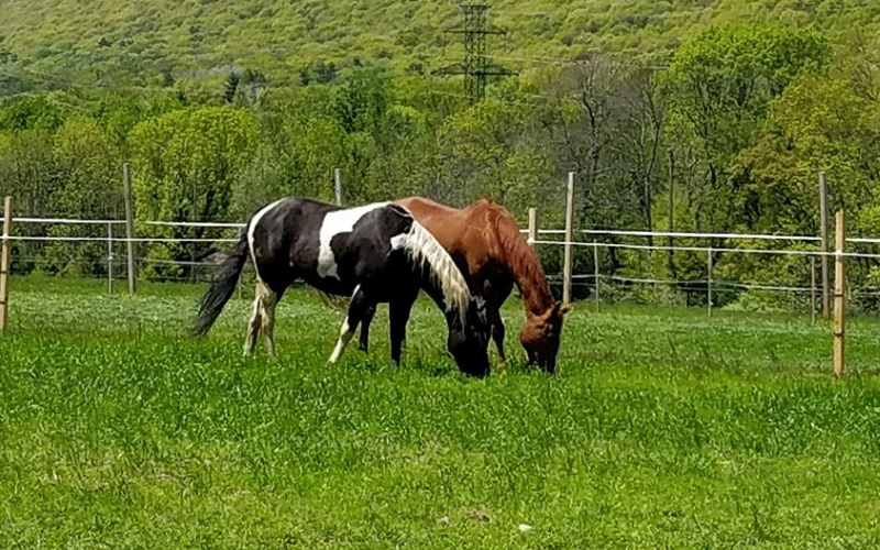 Horse Parties, Reptile Parties, Petting Zoo's and more! Call Mountainside Stables for your next animal party in NJ.