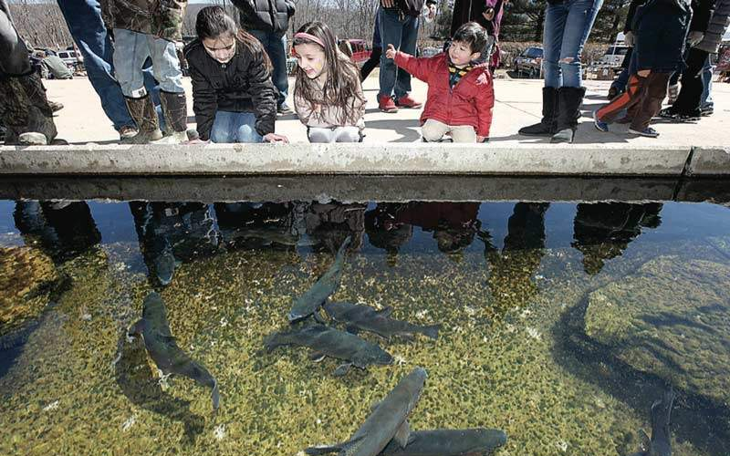 Pequest Trout Hatchery Activities for Kids in Oxford NJ