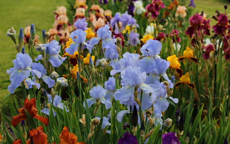 Presby Memorial Iris Gardens Daytime Activities Montclair NJ