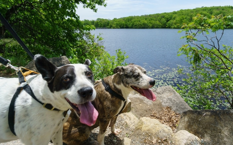 Ramapo Valley County Reservation Dog Hikes Mahwah NJ