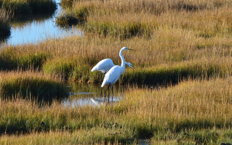 Salt Marsh Safari Top 50 Kids Attractions in Cape May NJ