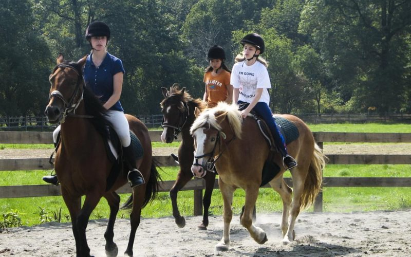 Seaton Hackney Stables horseback riding ranch in Morris County NJ