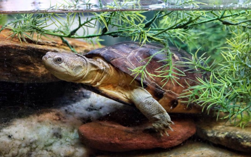 Snakes N Scales and Turtle Tales Boy Themed Parties NJ