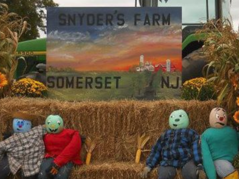 Pick your own pumpkins at Snyder's Farm in Somerset!