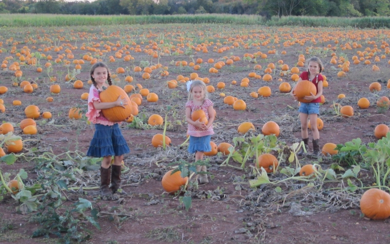Snyder's Farm Kid-Friendly Farm Attraction in Central New Jersey