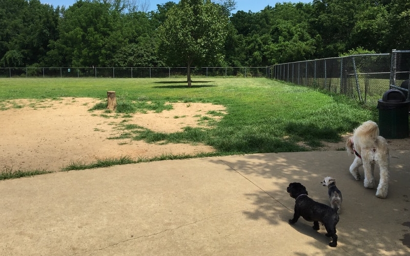 Thompson Park Dog Run Off Leash Park Lincroft NJ