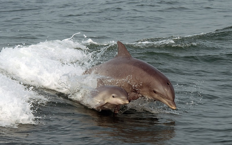 Spot dolphins with the Thunder Cat Dolphin Watcher as you set sail on a great boat tour in Southern NJ.