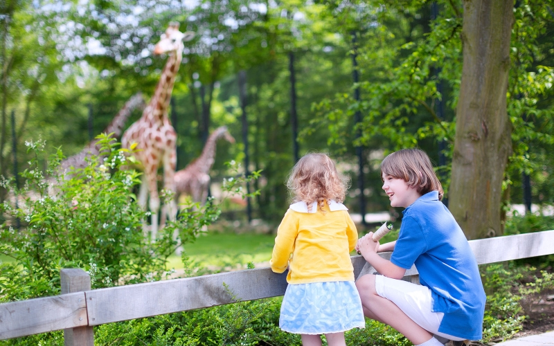 Turtle Back Zoo Top 50 Attractions for Kids in Northern Jersey
